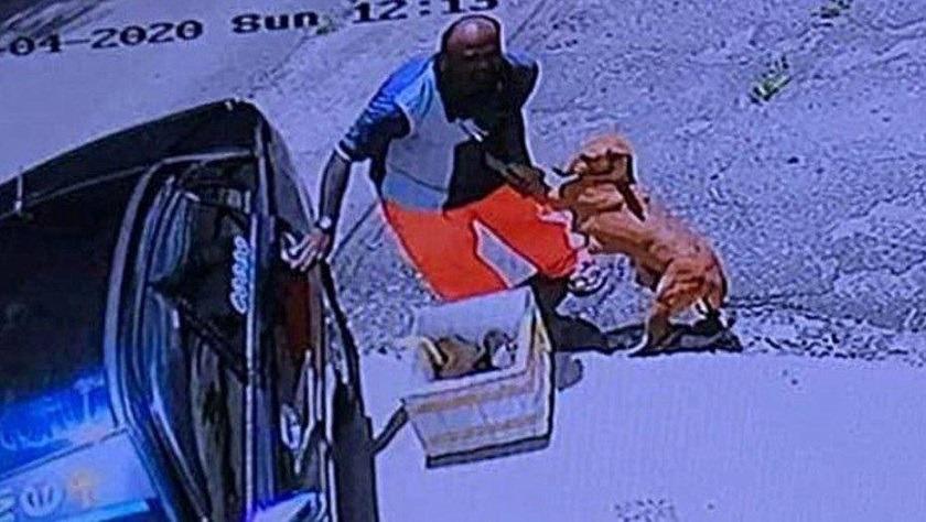 perra agarra a su dueño